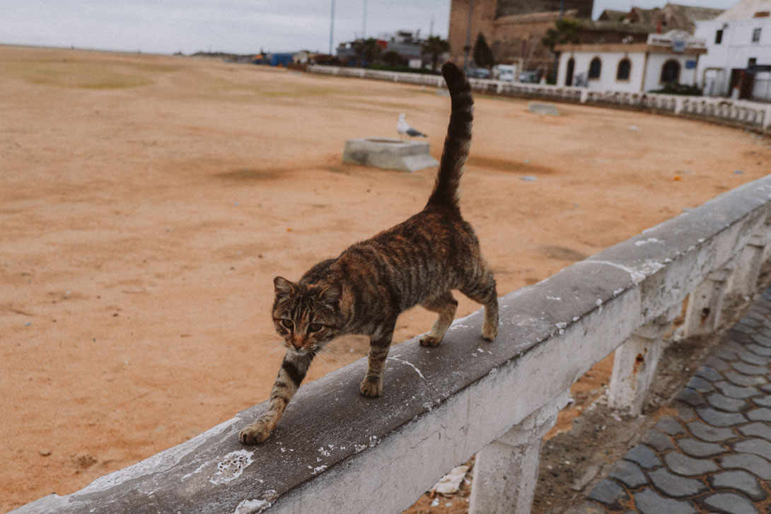 Kočka v Essaouira
