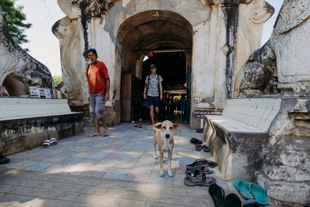 Je to on! Pes Falco se na důchod zašil v Baganu