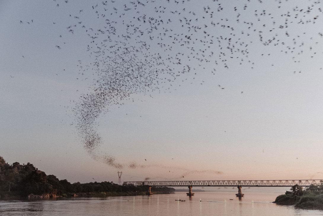Tisíce netopýrů u Hpa-An
