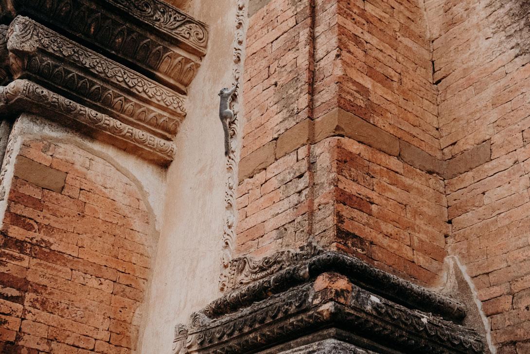Po chrámech pobíhají desítky veverek